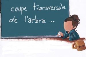 COUPE TRANSVERSALE D'UN ARBRE....... img_0003-300x199