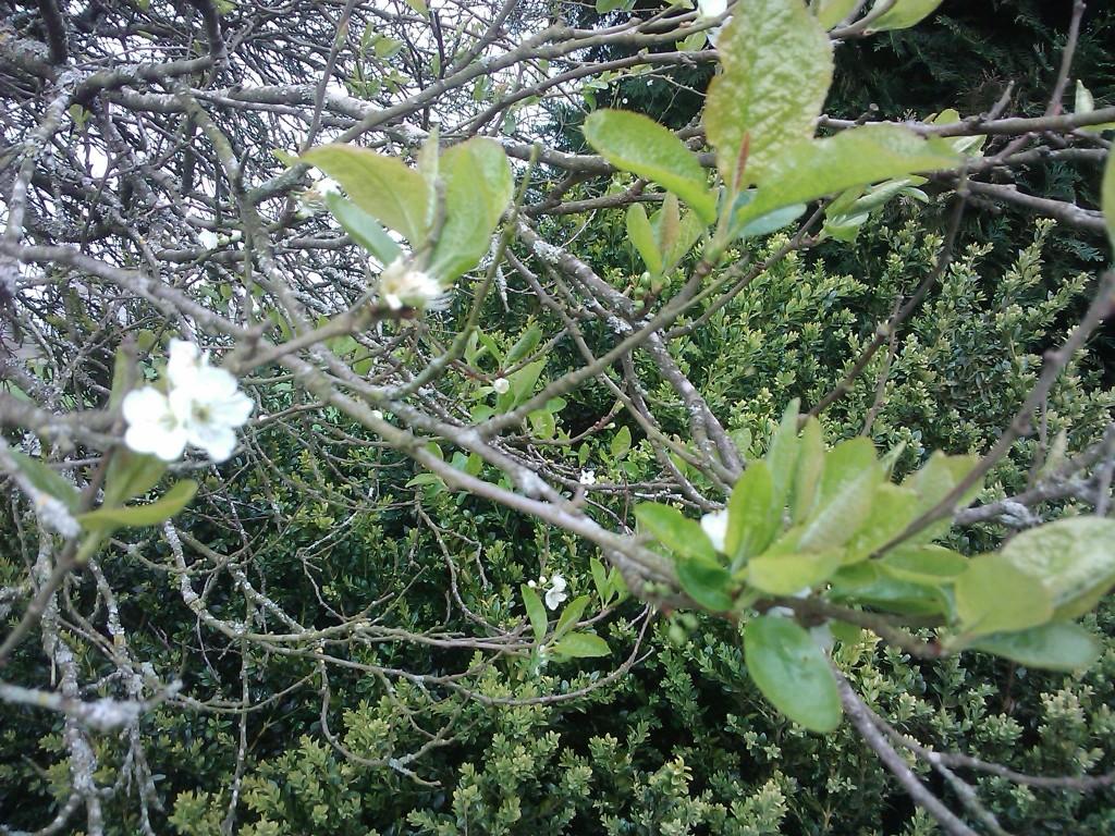 Apprentiecharpente la t te dans les fruitiers - Quand traiter les arbres fruitiers ...