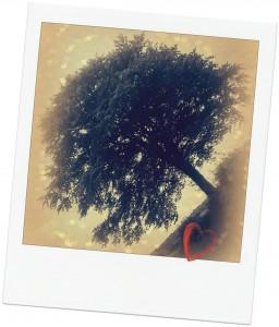 arbre-256x300